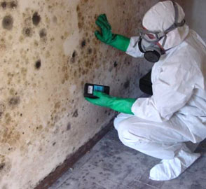 Risks of black mold image