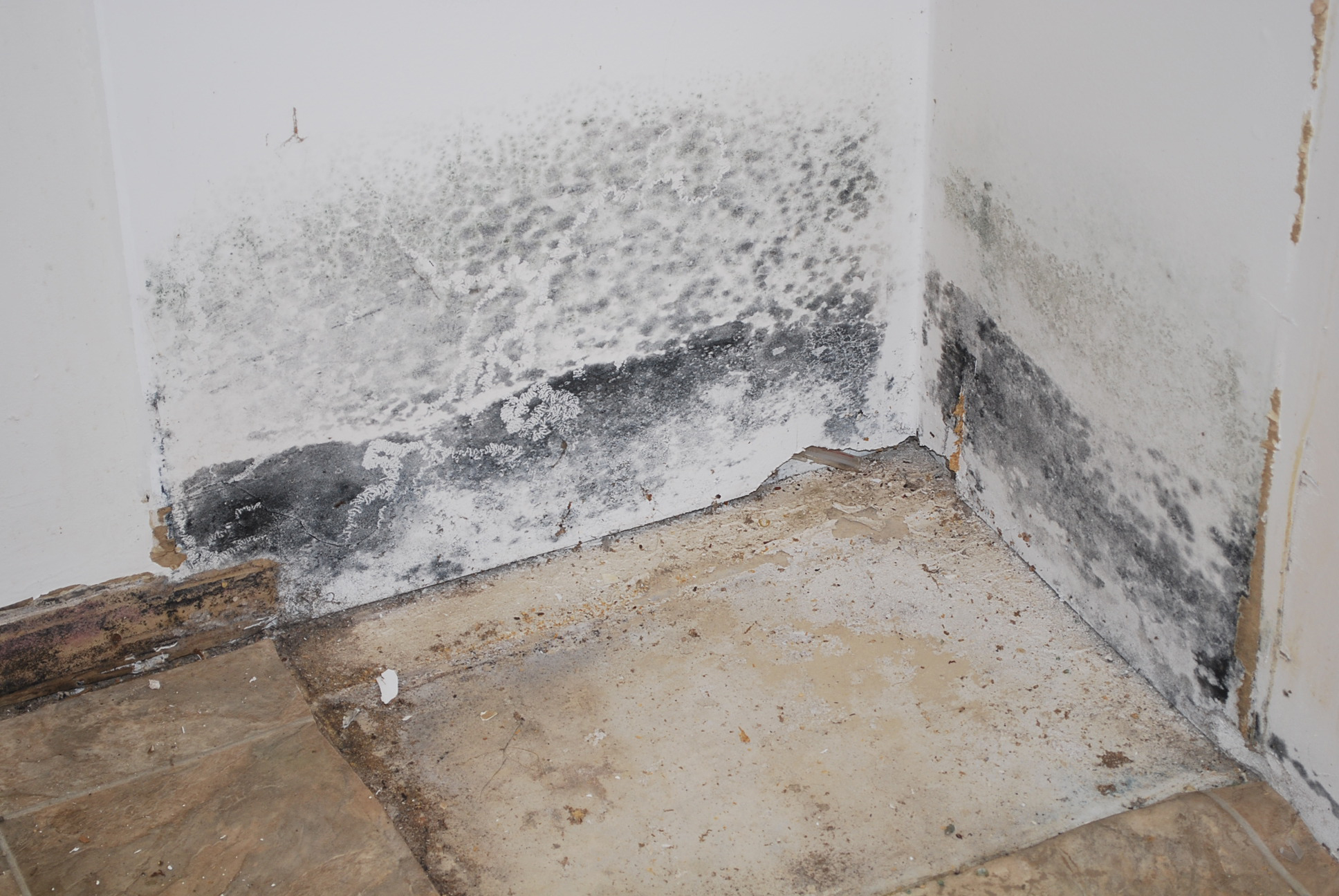 Mold in corner of room